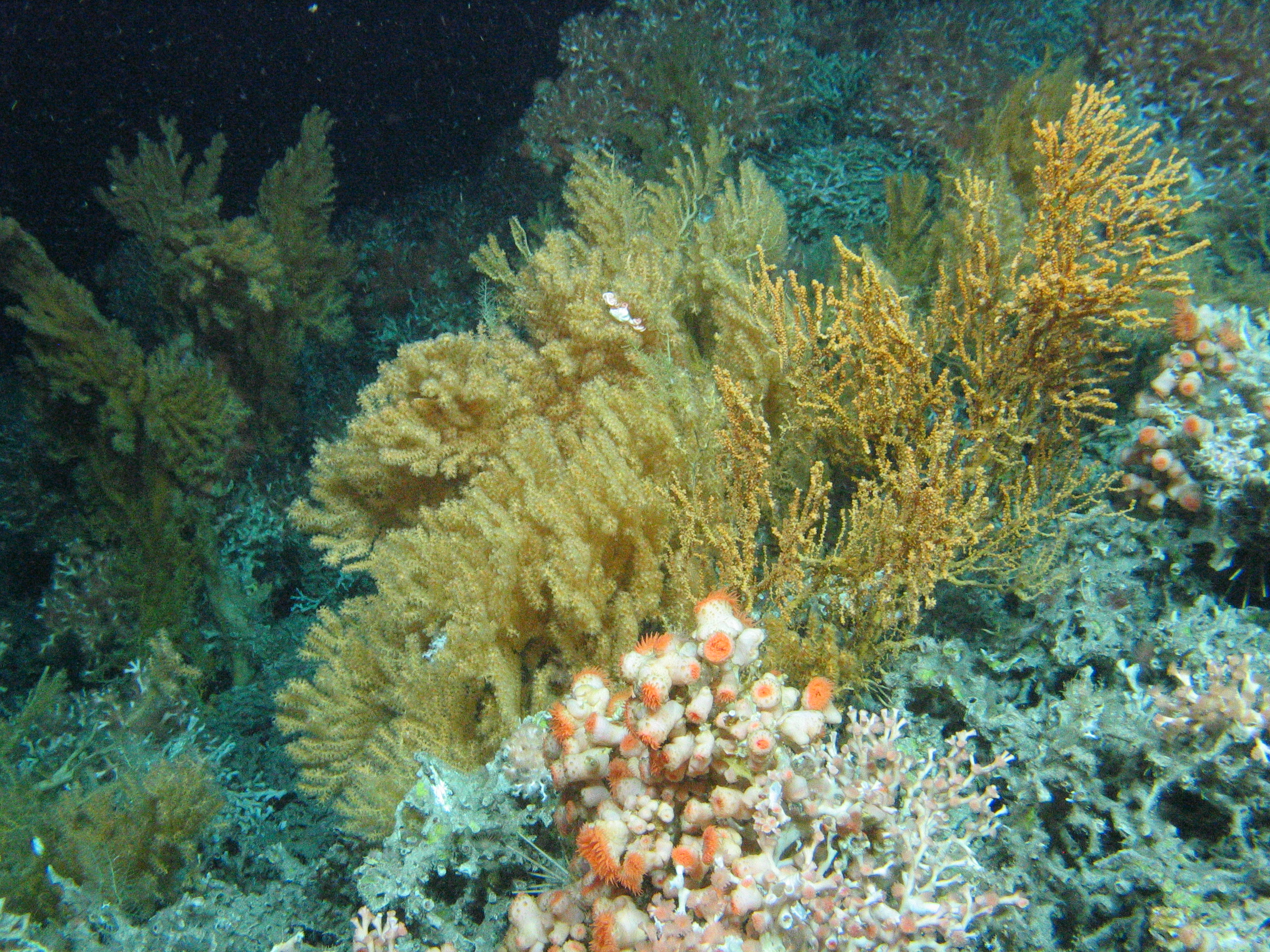 2. Deep sea ecosystem Credit J Murray Roberts University of Edinburgh
