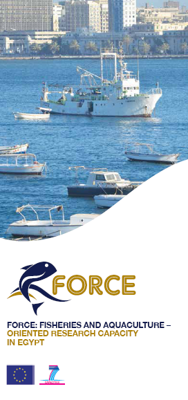 FORCE Brochure
